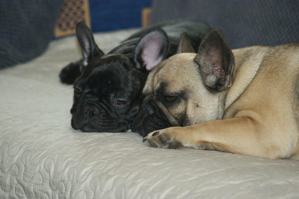 Leon & Lusi